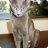 Adopt A Pet :: Gem - Palo Cedro, CA