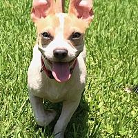 Adopt A Pet :: Frank Sinatra - Mandeville, LA