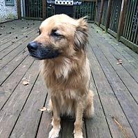 Adopt A Pet :: Bella - Ball Ground, GA