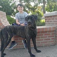 Adopt A Pet :: Sami - Goodyear, AZ