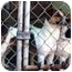 Photo 2 - Jack Russell Terrier Dog for adoption in Warren, New Jersey - Jetta