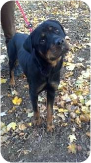 Rottweiler Mix Dog for adoption in Frederick, Pennsylvania - Heaven