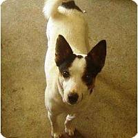 Adopt A Pet :: Duchess - Irvington, KY