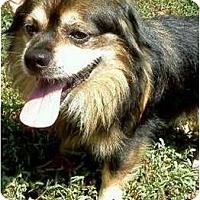Adopt A Pet :: Archie - Duluth, GA