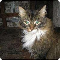 Adopt A Pet :: Lou - Warminster, PA