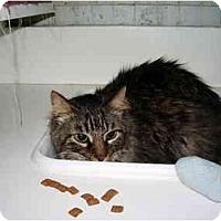 Adopt A Pet :: Tobie - Jacksonville, FL
