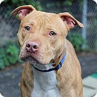 Adopt A Pet :: Brooklyn - Port Washington, NY
