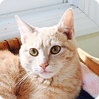 Adopt A Pet :: GRAVY aka MERLIN - 2015 - Hamilton, NJ