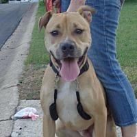 Adopt A Pet :: Bradley - Loganville, GA