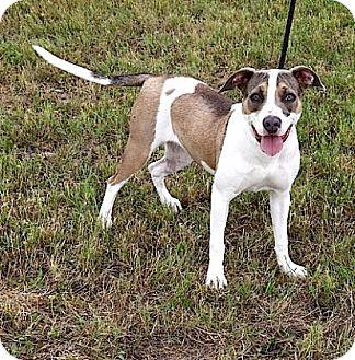 Pit Bull Terrier Mix Dog for adoption in Rapid City, South Dakota - Diamond