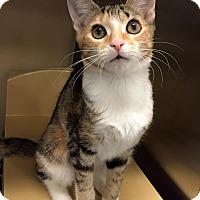 Adopt A Pet :: Andromeda - McDonough, GA