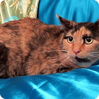 Adopt A Pet :: Julie - St. Louis, MO