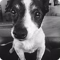Adopt A Pet :: Julia - Hagerstown, MD
