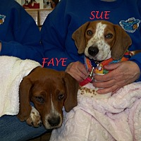 Adopt A Pet :: FAYE & SUE - Ventnor City, NJ