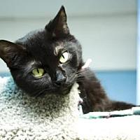 Adopt A Pet :: Vivian - Evansville, IN