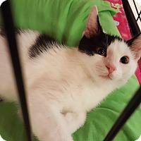 Adopt A Pet :: Onyx - Irwin, PA