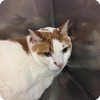 Adopt A Pet :: Cookie - Fall River, MA