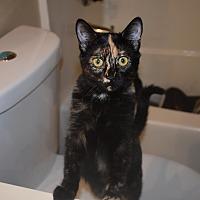 Adopt A Pet :: Lourdes - Los Angeles, CA