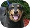 Rottweiler Mix Dog for adoption in Hamilton, Ontario - Isaac