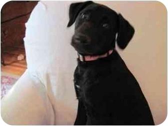 Labrador Retriever Mix Dog for adoption in Lincolnton, North Carolina - Nadine