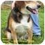 Photo 2 - Beagle Mix Dog for adoption in Somerset, Pennsylvania - Beaney