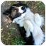 Photo 1 - Border Collie Dog for adoption in San Pedro, California - CHARLEY