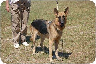 German Shepherd Dog Mix Dog for adoption in Preston, Connecticut - Trinity