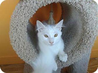 Domestic Shorthair Cat for adoption in Philadelphia, Pennsylvania - Garbo