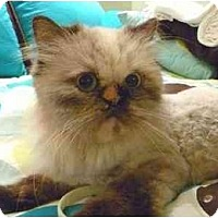 Adopt A Pet :: Kristie - Beverly Hills, CA