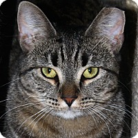 Adopt A Pet :: Marianne - North Branford, CT
