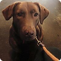 Adopt A Pet :: MOCHA - Coudersport, PA