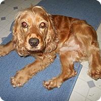 Adopt A Pet :: Max -Adopted! - Kannapolis, NC