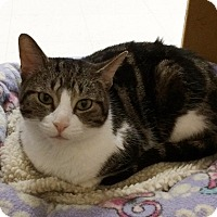 Adopt A Pet :: Juno - Byron Center, MI