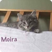 Adopt A Pet :: Moira - Jackson, NJ