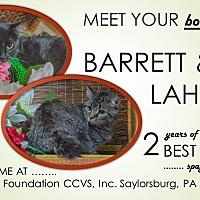 Adopt A Pet :: Barrett - Saylorsburg, PA