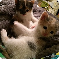 Adopt A Pet :: Buffy & Meadow - Horsham, PA