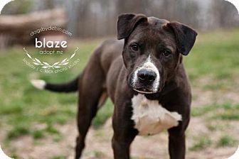 Boxer/Beagle Mix Dog for adoption in Kansas City, Missouri - Blaze