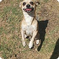 Adopt A Pet :: Hoofie - Palm Bay, FL