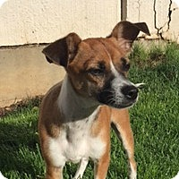 Adopt A Pet :: Jefferson - Sunnyvale, CA