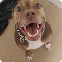 Adopt A Pet :: Madison - Menands, NY