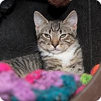 Adopt A Pet :: Valihura - Wilmington, DE
