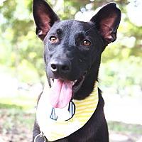 Adopt A Pet :: Upton - San Mateo, CA