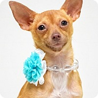 Adopt A Pet :: Posey - Dublin, CA