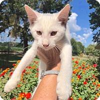 Adopt A Pet :: Alfie - Smithtown, NY