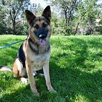 Adopt A Pet :: Jumpin' Jack Flash - Denver, CO