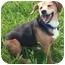 Photo 4 - Beagle Mix Dog for adoption in Toronto, Ontario - Sadie