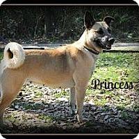 Adopt A Pet :: Princess - Vancleave, MS