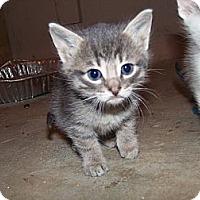 Adopt A Pet :: Rigby - Roseville, MI