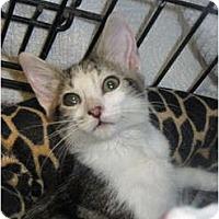 Adopt A Pet :: Twinkle - Modesto, CA
