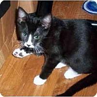 Adopt A Pet :: Twinny - Alexandria, VA